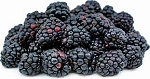 Fresh Blackberries18oz